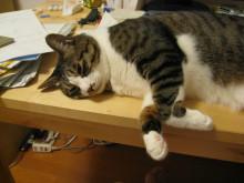 「一生綺麗な姿勢でいたい!」を考えるブログ☆-机のうえ